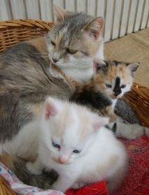 cats hiding kittensd