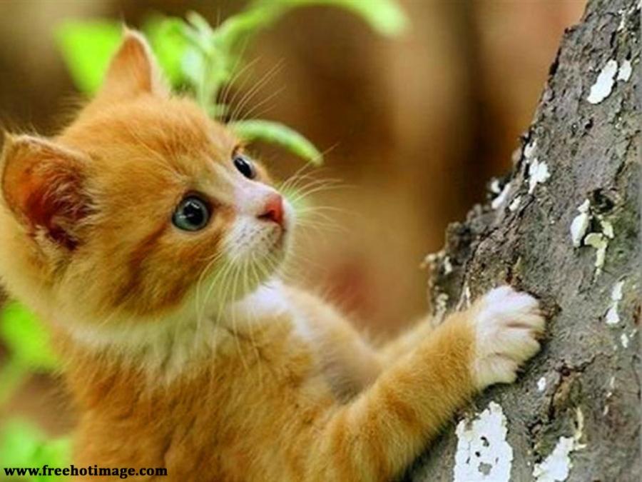 Cat Climb Tree