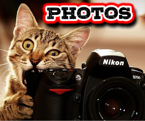 Cat-Photos