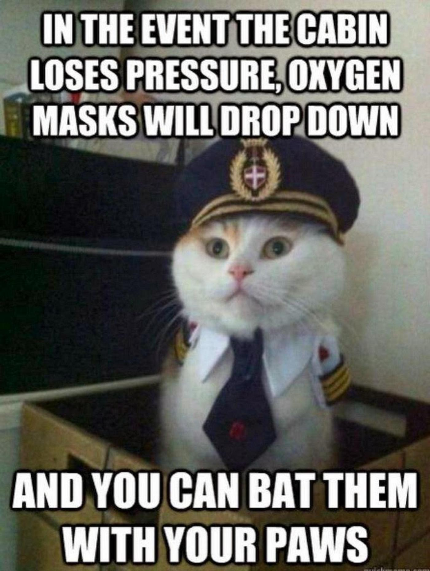funny-cat-as-airplane-captain-4949