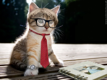 intellectual-cat-small3