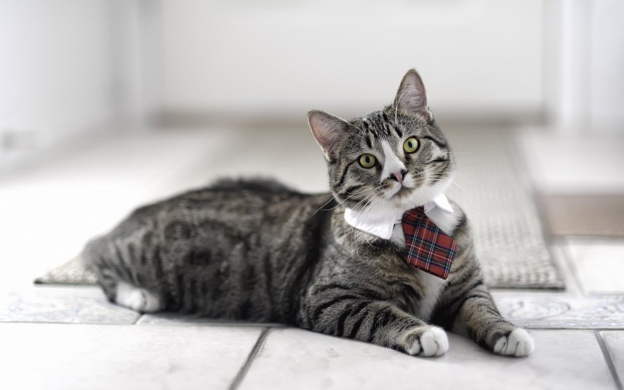 i_am_a_business_cat_2560x1600