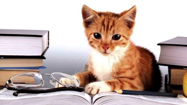 cat styding.jpg