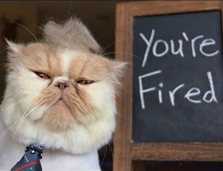trump-cat-youre-fired